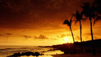 Sunset nature walking dead the palm trees Wallpaper