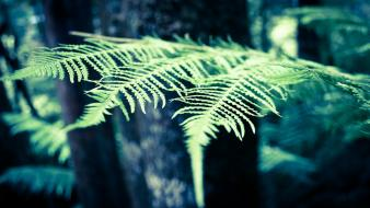 Trees ferns depth of field blurred background forest wallpaper