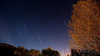 Trees night sky star trails wallpaper
