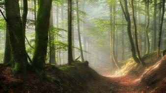 Trees paths fog pathway mystic sun rays wallpaper