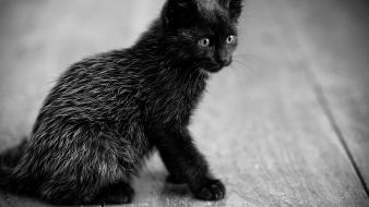 Animals cats grayscale nature wallpaper