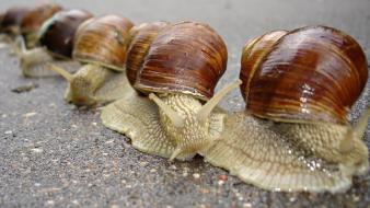 Animals macro molluscs mollusks snails wallpaper