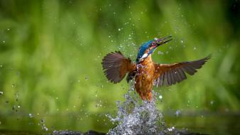 Birds kingfisher macro nature splashes Wallpaper