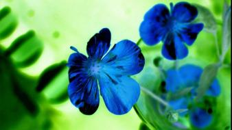 Blue flowers beautiful wallpaper