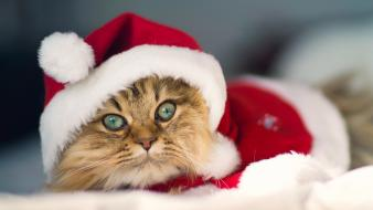 Cute santa cat wallpaper
