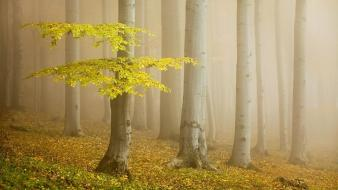 Dawn yellow forests fog morning colors mystical wallpaper