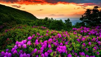 Flowers earth wallpaper