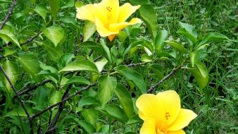 Flowers nature plants yellow wallpaper