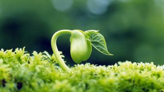 Growing plant wallpaper