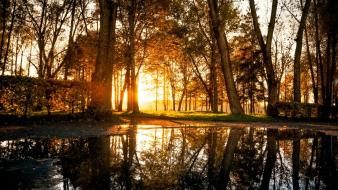 Landscapes nature trees grass golden lagoon reflections wallpaper
