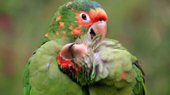 National geographic birds nature parrots wallpaper