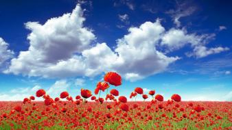 Nature flowers fields outdoors poppies wallpaper