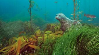 Nature seals national geographic bank underwater wallpaper