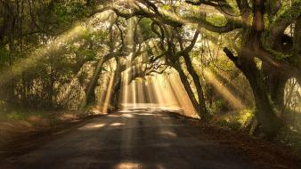 Nature trees forests pathway breaking sun rays wallpaper