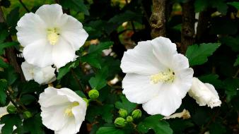 Nature white flowers plants wallpaper