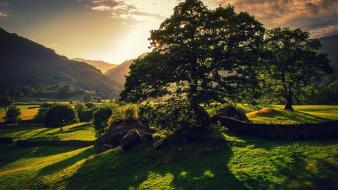 Norway landscapes nature sunlight trees wallpaper