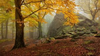Trees autumn yellow forests leaves fog dawning wallpaper