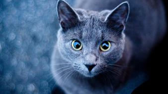 Animals cats Wallpaper