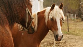 Animals horses ponies stable wallpaper