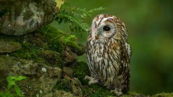 Animals rocks owls ferns wallpaper