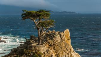 California pacific sea cypress tree monterey peninsula wallpaper