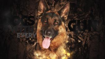 Call of duty dogs shepherd dog wallpaper