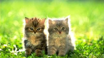 Cats green kittens wallpaper