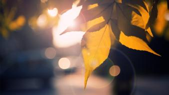 Close-up nature autumn leaves sunlight Wallpaper