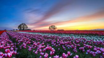 Clouds landscapes fields tulips wallpaper