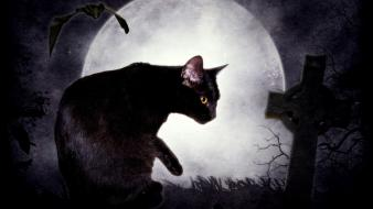 Edgar allan poe bats cats cemetery dark Wallpaper