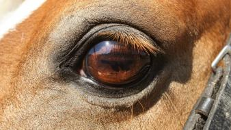 Eyes animals summer horses africa eye lashes warm wallpaper