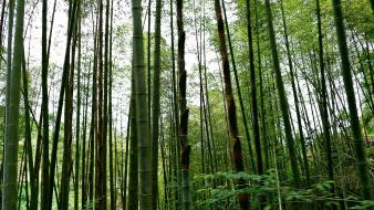 Landscapes nature trees forests bamboo wallpaper