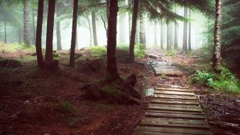 Landscapes nature trees forests paths fog trail dawning wallpaper