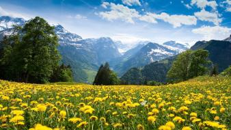 Mountains flowers alps yellow wallpaper