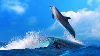 Animals dolphins sealife wallpaper