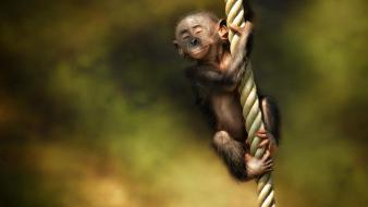 Animals monkeys wallpaper
