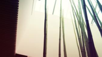 Architecture bamboo bright modern nature wallpaper