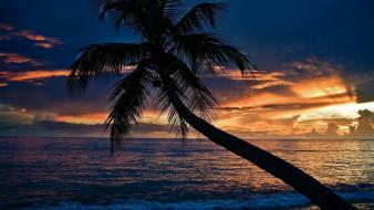 Beaches clouds coconut tree sea sunset wallpaper