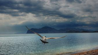 Birds clouds mountains nature waterscapes Wallpaper