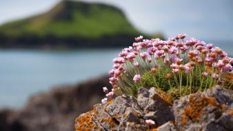 Blurred background flowers islands moss plants wallpaper