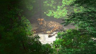Cgi wild africa animals digital art leopards wallpaper