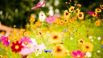Colorful flowers photography wallpaper