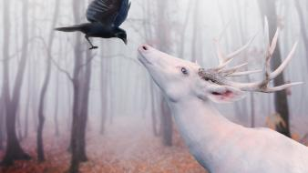 Deer digital art crows albino photo manipulation wallpaper