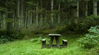 Forests tables calm bench wallpaper