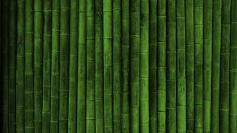 Green nature bamboo wallpaper