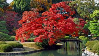 Japan trees autumn bridges lakes colors wallpaper