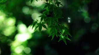 Japanese leaves wallpaper
