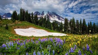 Mountains clouds landscapes nature forests meadows wildflowers skies wallpaper