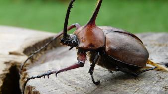 Nature insects beetles macro wallpaper
