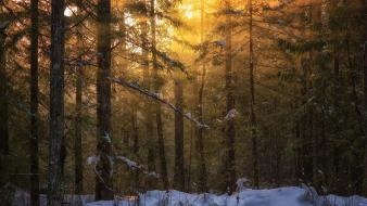 Wood forests sunlight british columbia vancouver island Wallpaper